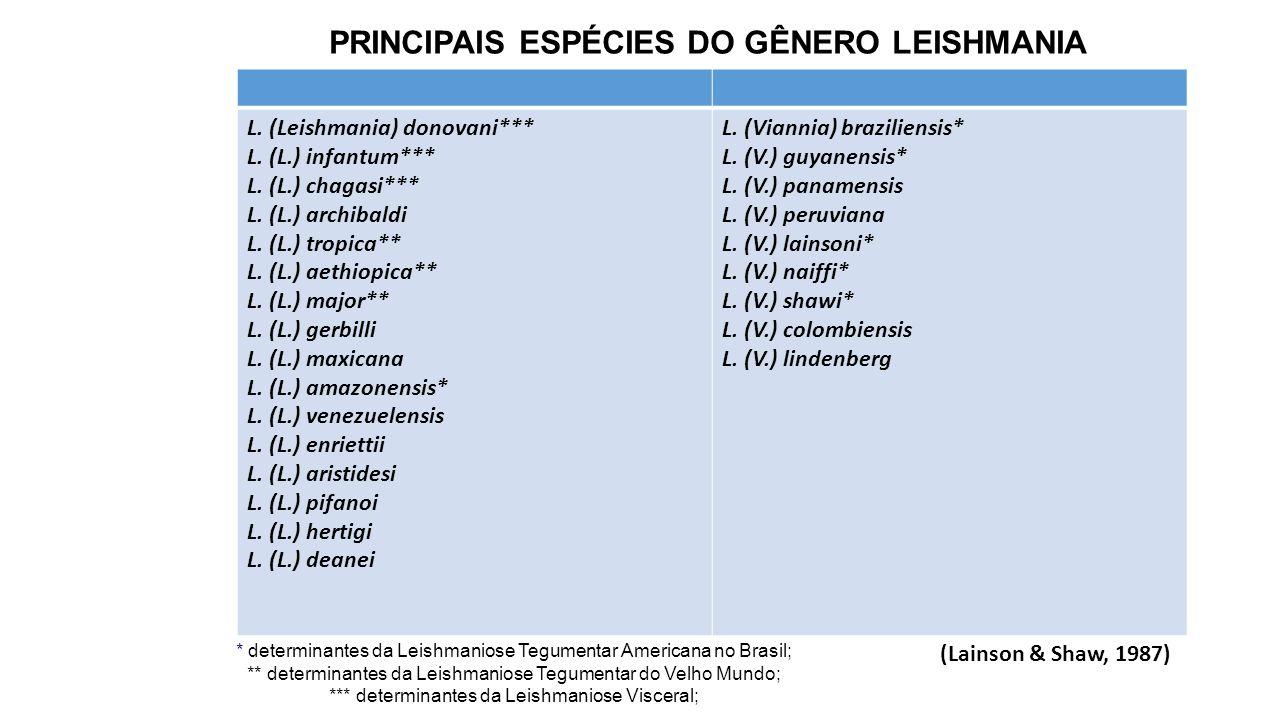 PRINCIPAIS ESPÉCIES DO GÊNERO LEISHMANIA
