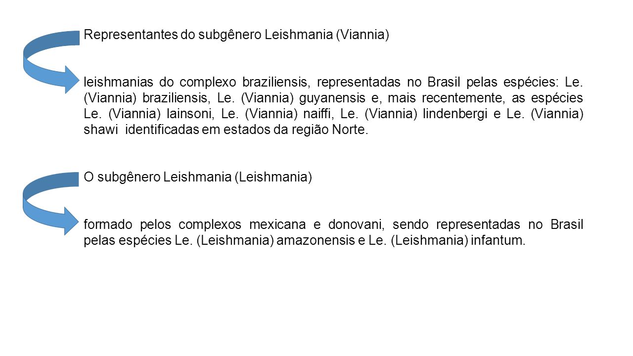 Representantes do subgênero Leishmania (Viannia)