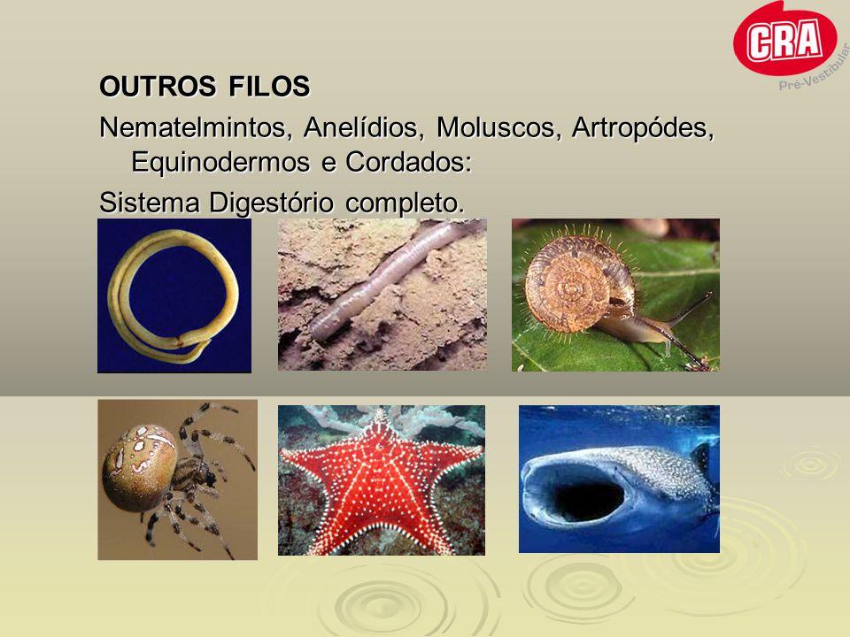 OUTROS FILOS Nematelmintos, Anelídios, Moluscos, Artropódes, Equinodermos e Cordados: Sistema Digestório completo.