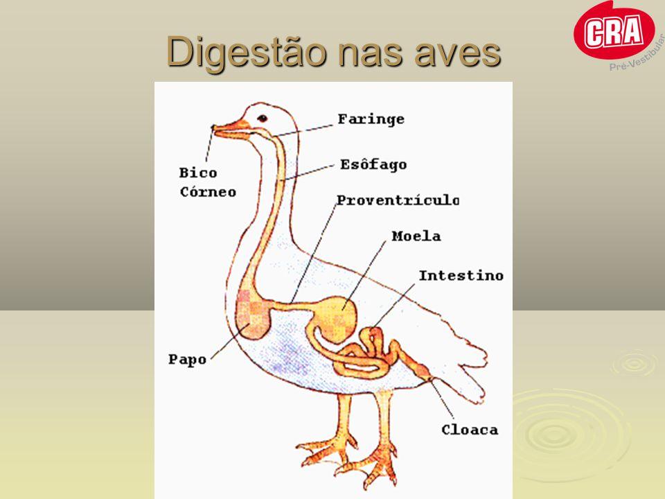 Digestão nas aves