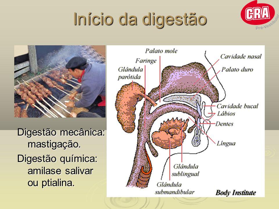 Início da digestão Digestão mecânica: mastigação.