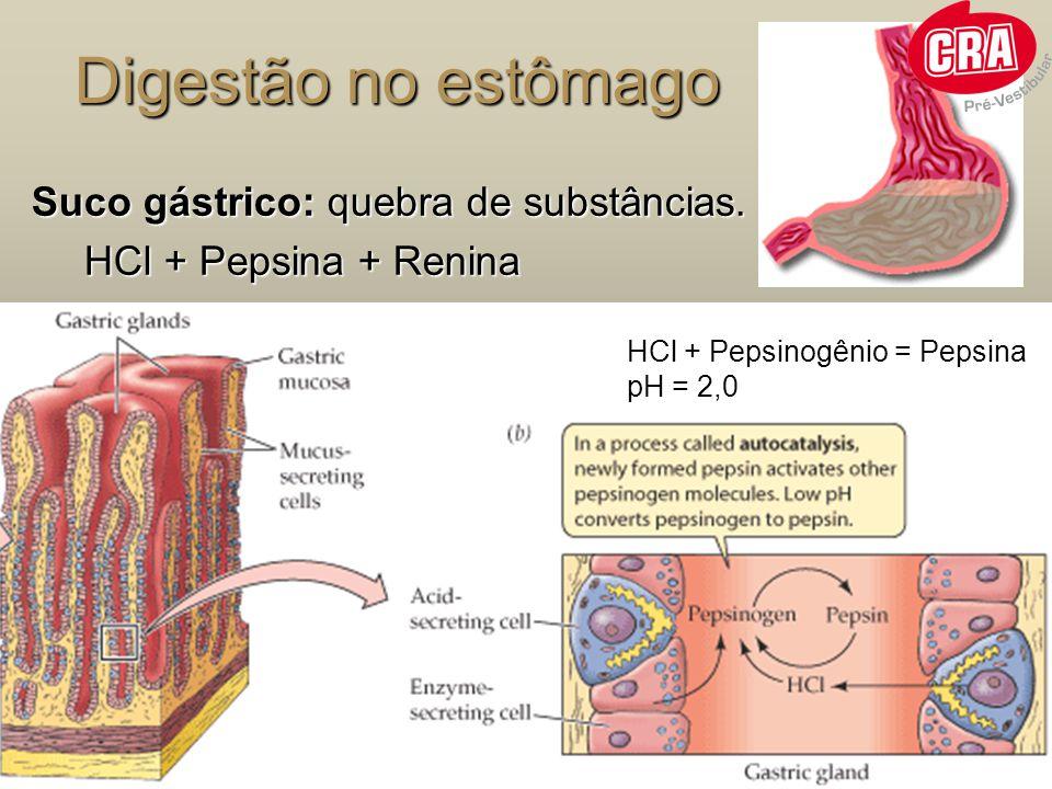 Digestão no estômago Suco gástrico: quebra de substâncias.