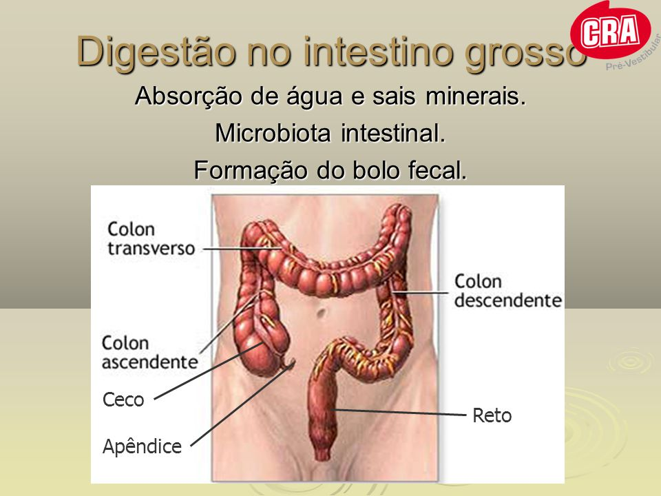 Digestão no intestino grosso