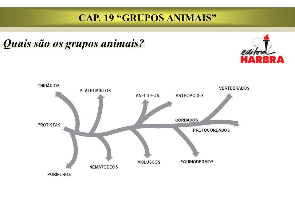 Quais são os grupos animais
