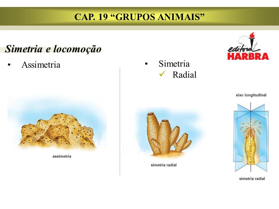 Simetria e locomoção CAP. 19 GRUPOS ANIMAIS Simetria Assimetria