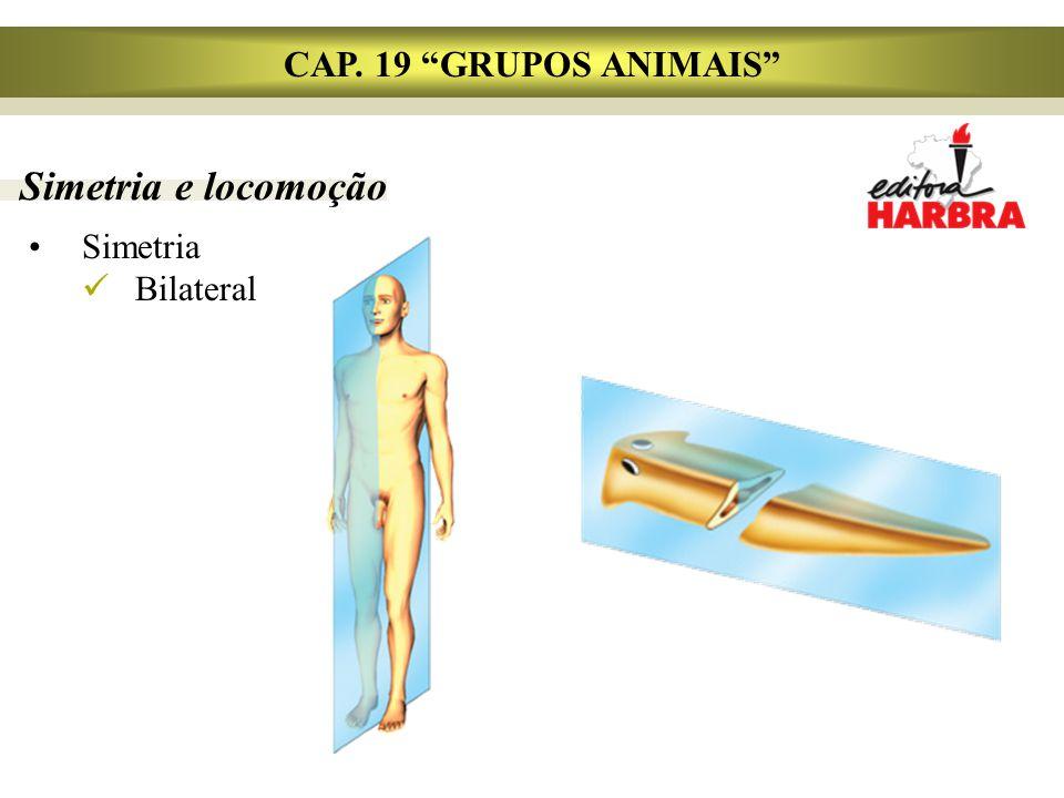 CAP. 19 GRUPOS ANIMAIS Simetria e locomoção Simetria Bilateral