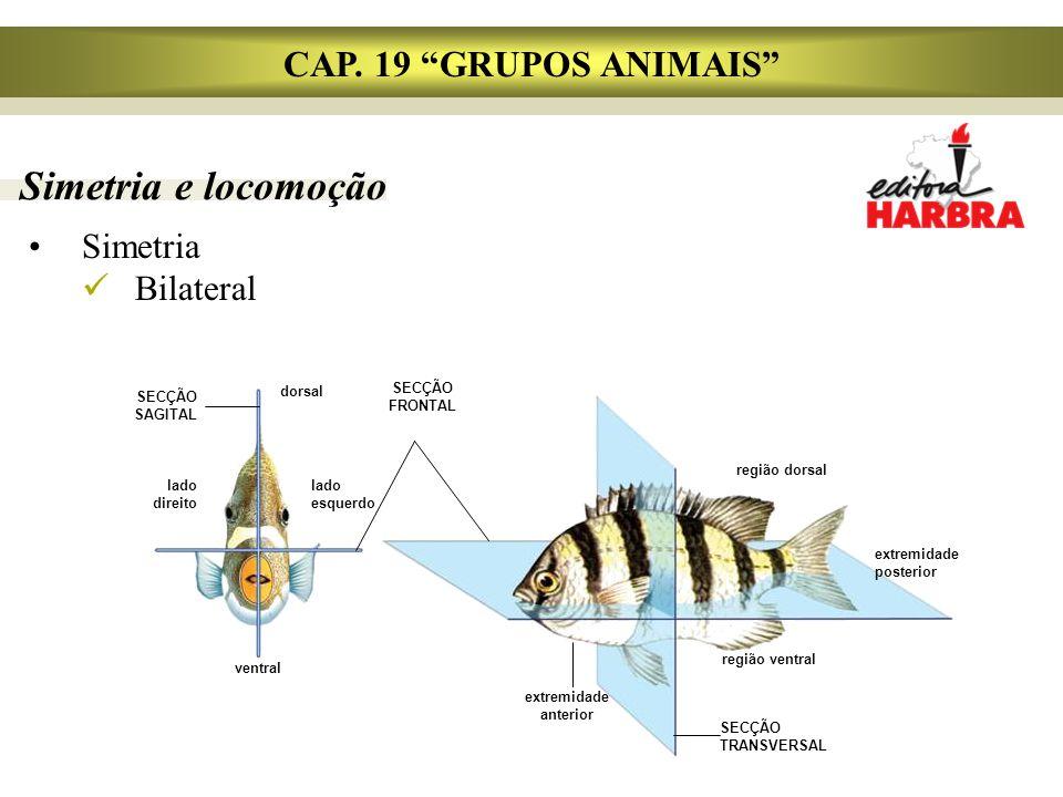Simetria e locomoção CAP. 19 GRUPOS ANIMAIS Simetria Bilateral