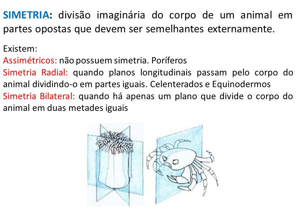 SIMETRIA: divisão imaginária do corpo de um animal em partes opostas que devem ser semelhantes externamente.