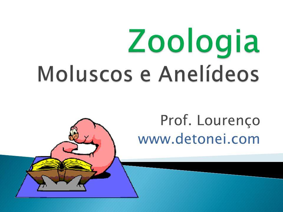Zoologia Moluscos e Anelídeos