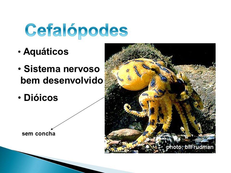 Cefalópodes Sistema nervoso bem desenvolvido Dióicos Aquáticos