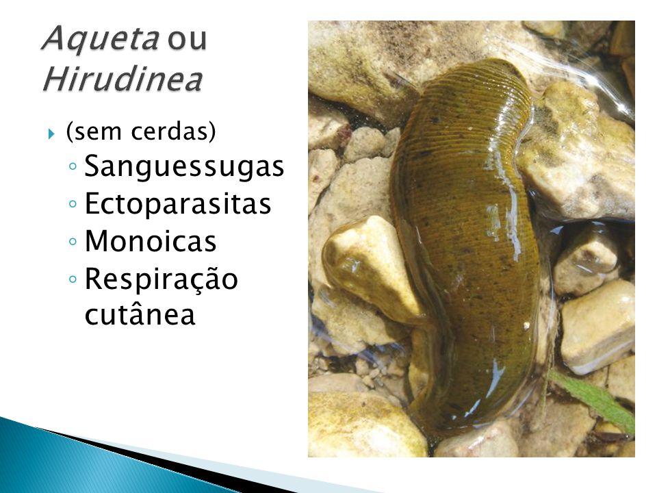 Aqueta ou Hirudinea Sanguessugas Ectoparasitas Monoicas