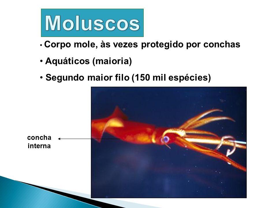 Moluscos Aquáticos (maioria) Segundo maior filo (150 mil espécies)