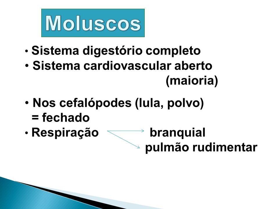 Moluscos Sistema cardiovascular aberto (maioria)