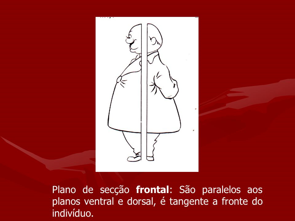 Plano de secção frontal: São paralelos aos planos ventral e dorsal, é tangente a fronte do indivíduo.