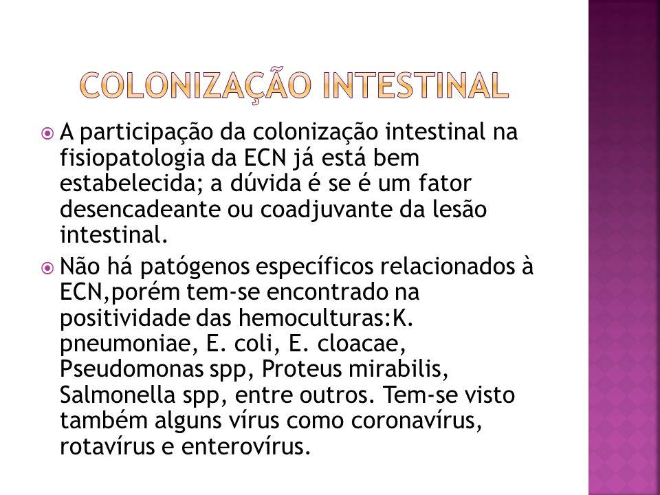 Colonização intestinal