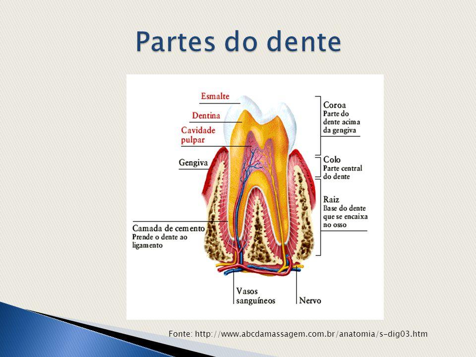 Partes do dente Fonte: http://www.abcdamassagem.com.br/anatomia/s-dig03.htm