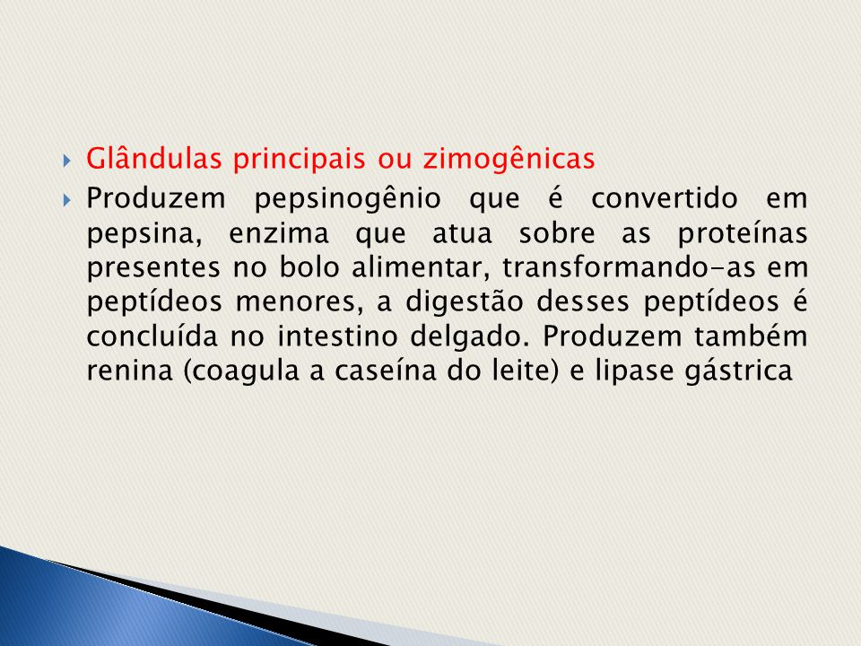 Glândulas principais ou zimogênicas