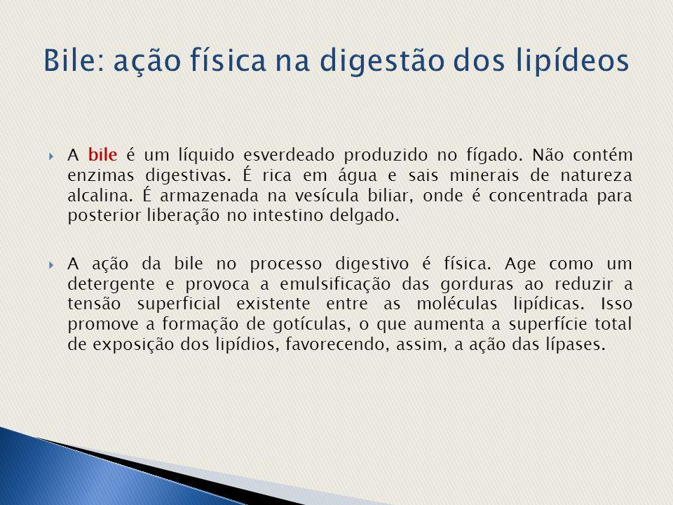 Bile: ação física na digestão dos lipídeos