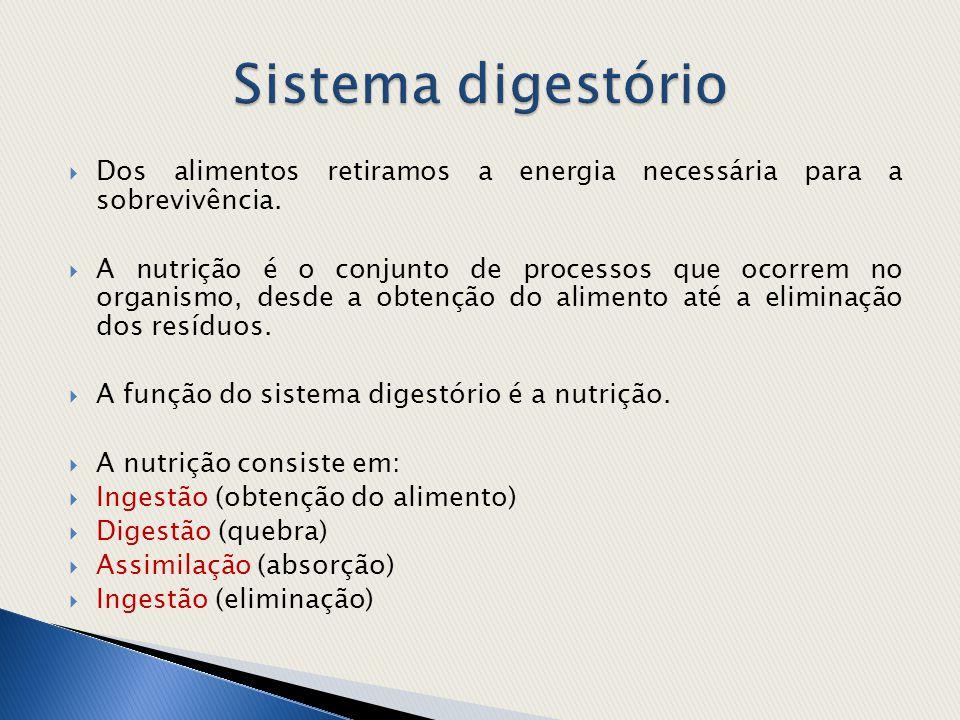 Sistema digestório Dos alimentos retiramos a energia necessária para a sobrevivência.