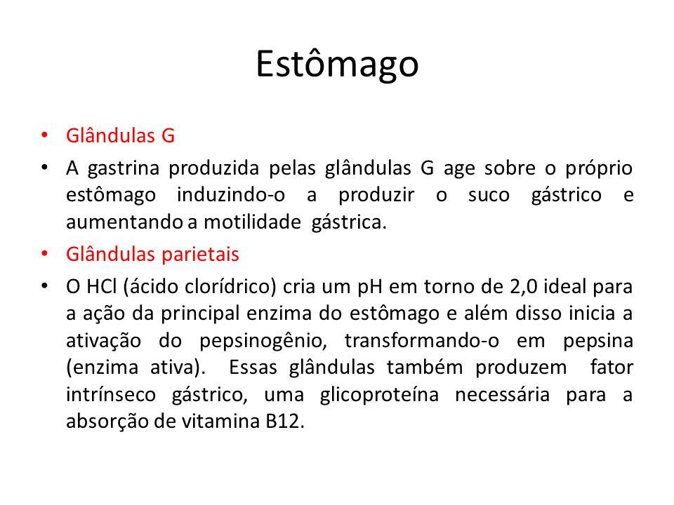 Estômago Glândulas G.