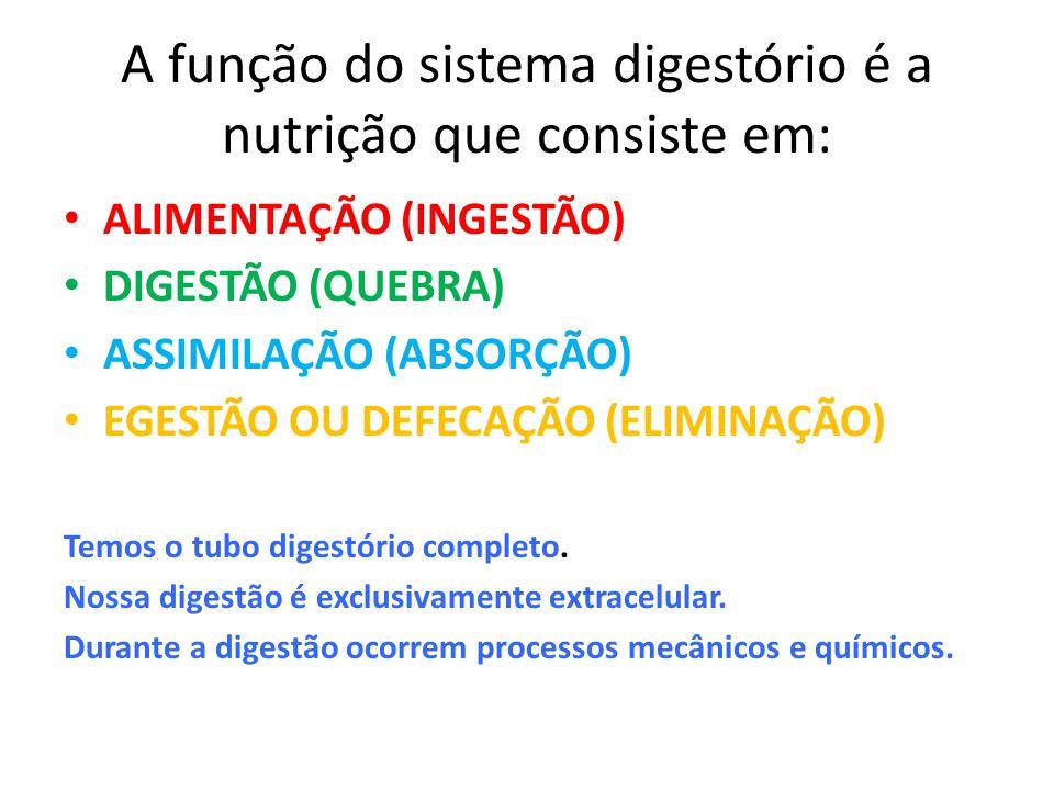 A função do sistema digestório é a nutrição que consiste em: