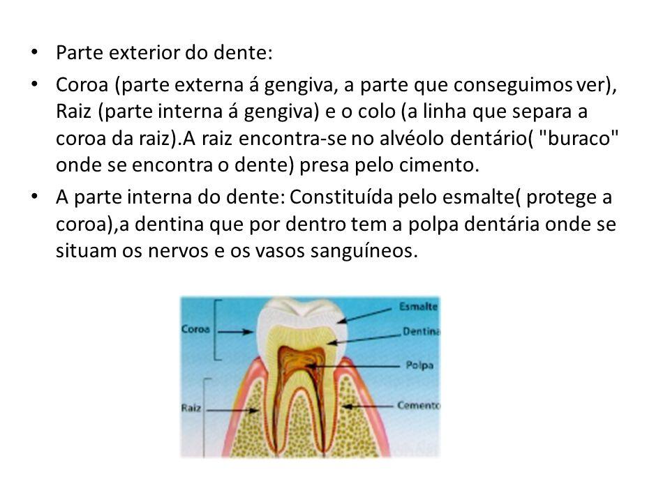 Parte exterior do dente: