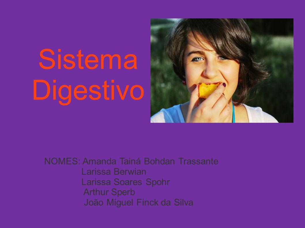 Sistema Digestivo NOMES: Amanda Tainá Bohdan Trassante Larissa Berwian