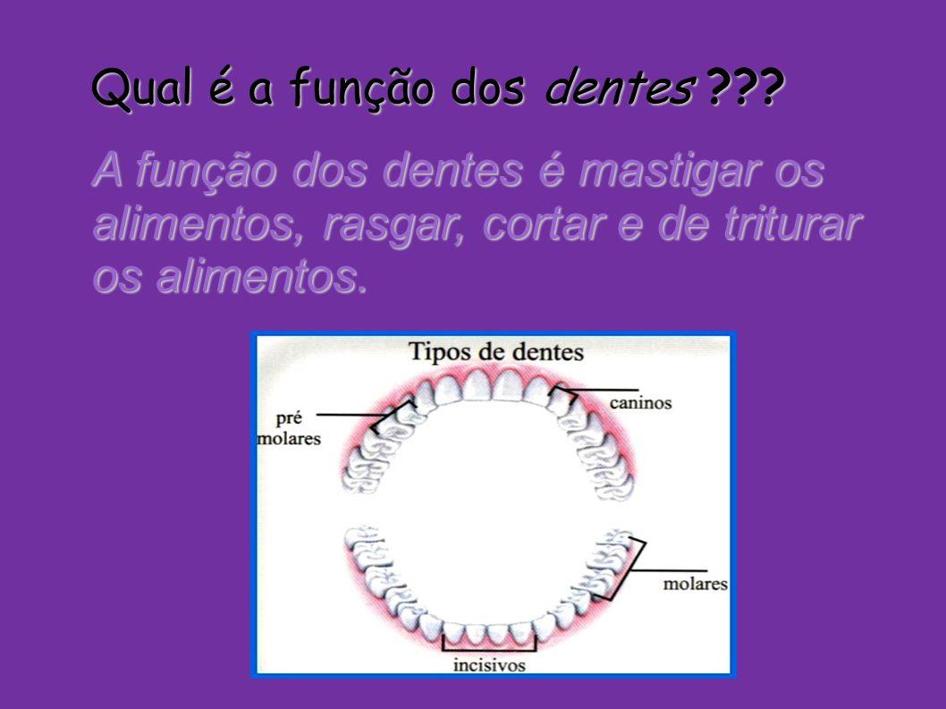 Qual é a função dos dentes