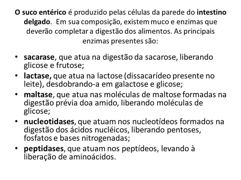 O suco entérico é produzido pelas células da parede do intestino delgado. Em sua composição, existem muco e enzimas que deverão completar a digestão dos alimentos. As principais enzimas presentes são: