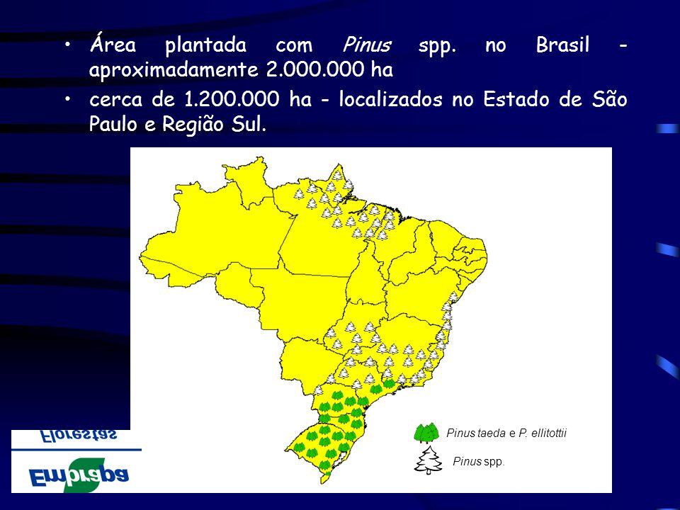 Área plantada com Pinus spp. no Brasil - aproximadamente 2.000.000 ha