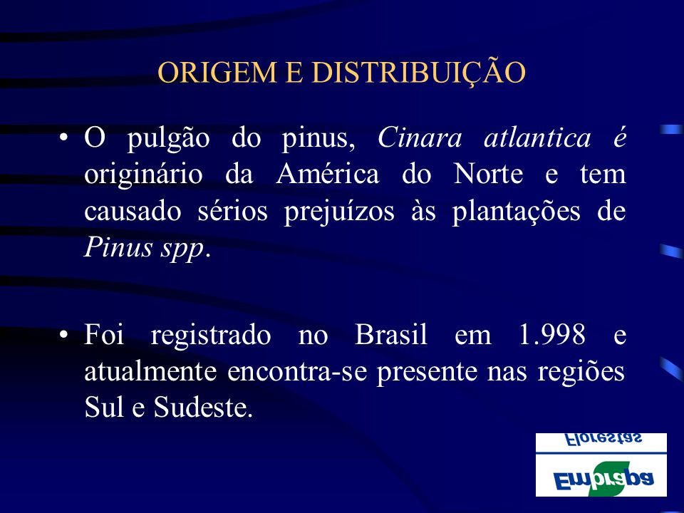 ORIGEM E DISTRIBUIÇÃO O pulgão do pinus, Cinara atlantica é originário da América do Norte e tem causado sérios prejuízos às plantações de Pinus spp.