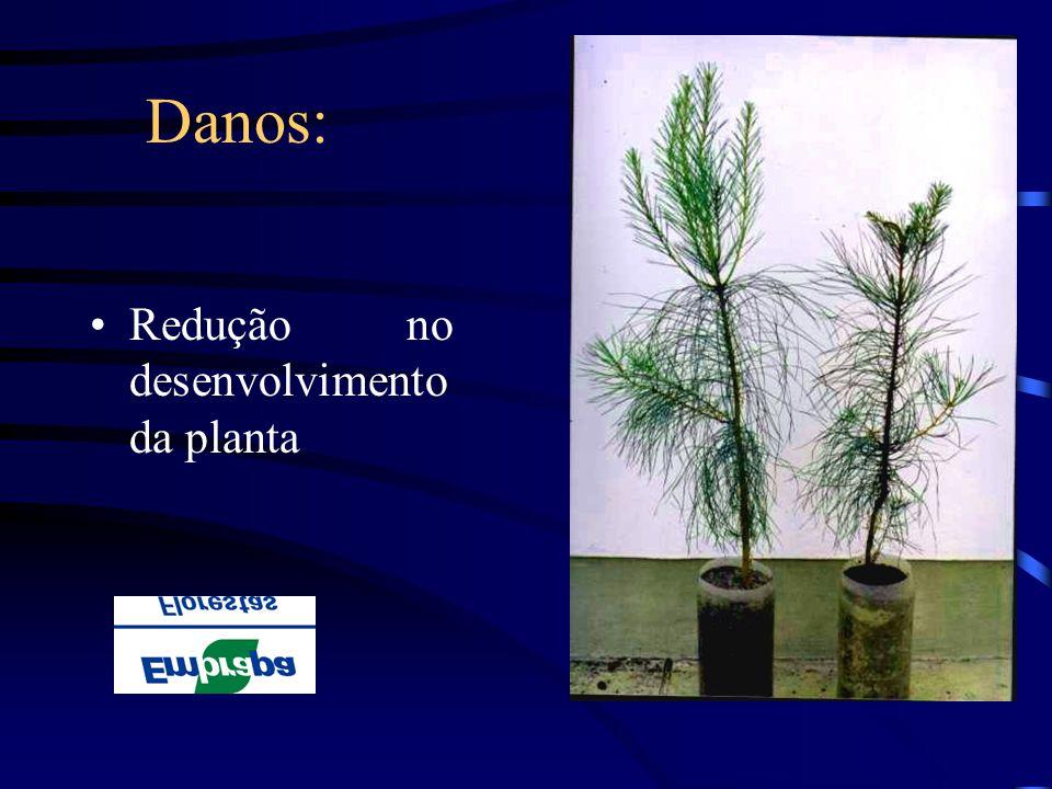 Danos: Redução no desenvolvimento da planta