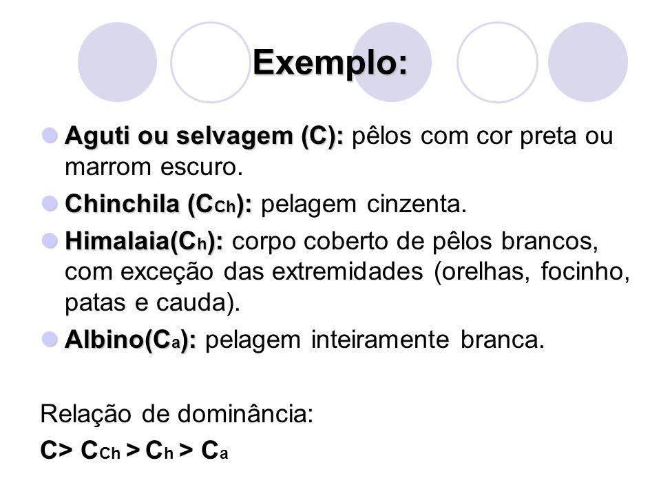 Exemplo: Aguti ou selvagem (C): pêlos com cor preta ou marrom escuro.