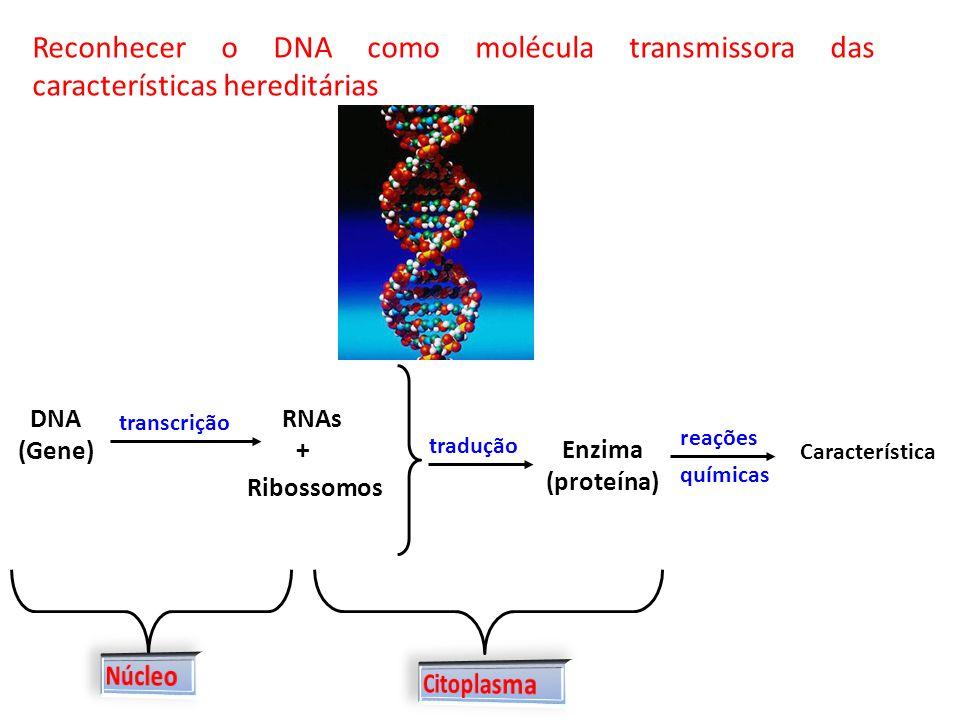 Reconhecer o DNA como molécula transmissora das características hereditárias