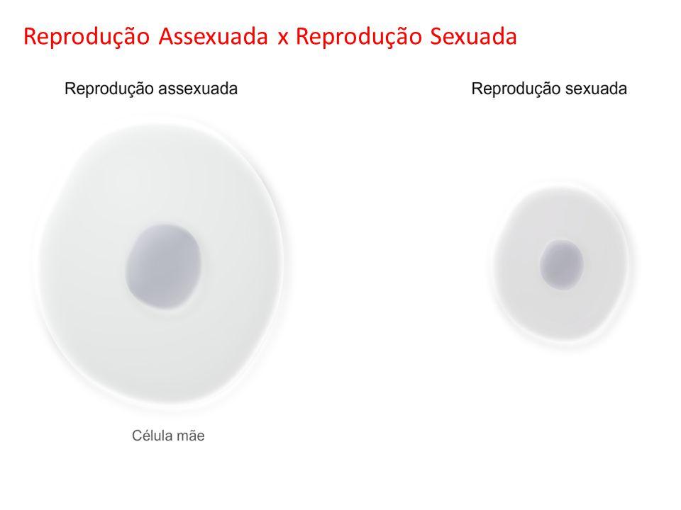 Reprodução Assexuada x Reprodução Sexuada