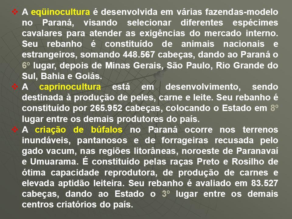 A eqüinocultura é desenvolvida em várias fazendas-modelo no Paraná, visando selecionar diferentes espécimes cavalares para atender as exigências do mercado interno. Seu rebanho é constituído de animais nacionais e estrangeiros, somando 448.567 cabeças, dando ao Paraná o 6º lugar, depois de Minas Gerais, São Paulo, Rio Grande do Sul, Bahia e Goiás.