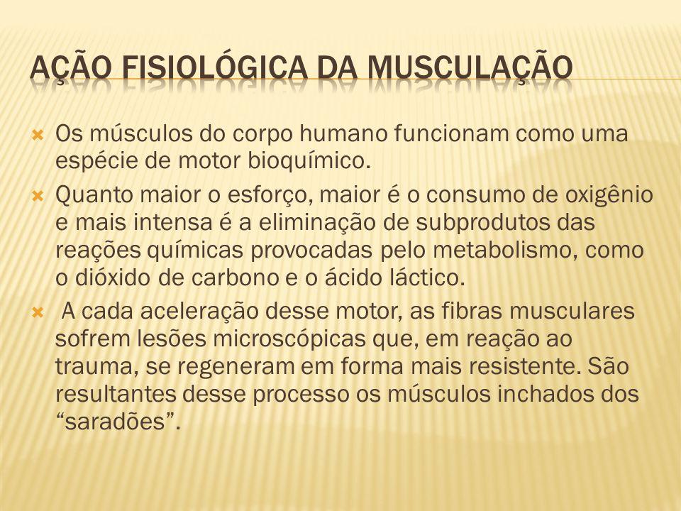Ação fisiológica da musculação