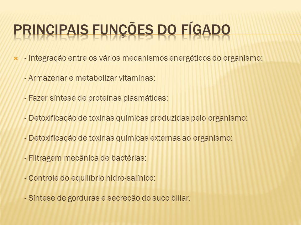 Principais funções do fígado