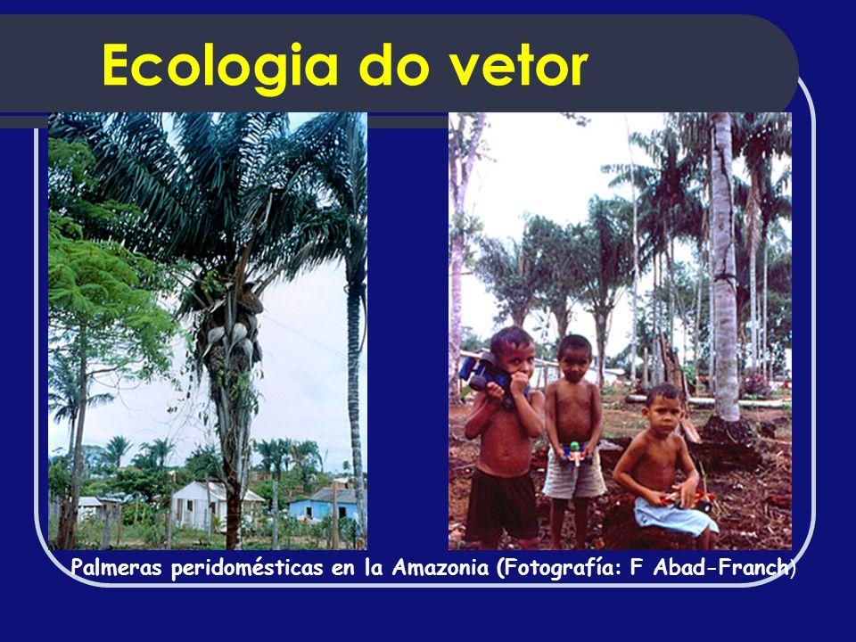 Ecologia do vetor Palmeras peridomésticas en la Amazonia (Fotografía: F Abad-Franch)