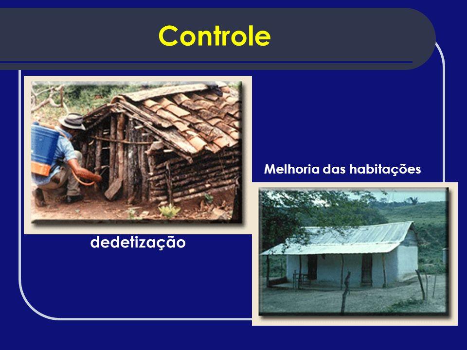 Controle Melhoria das habitações dedetização