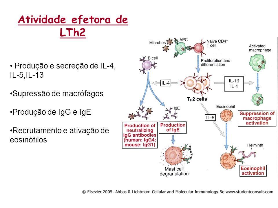 Atividade efetora de LTh2