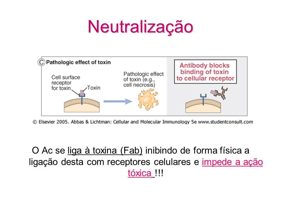 Neutralização O Ac se liga à toxina (Fab) inibindo de forma física a ligação desta com receptores celulares e impede a ação tóxica !!!