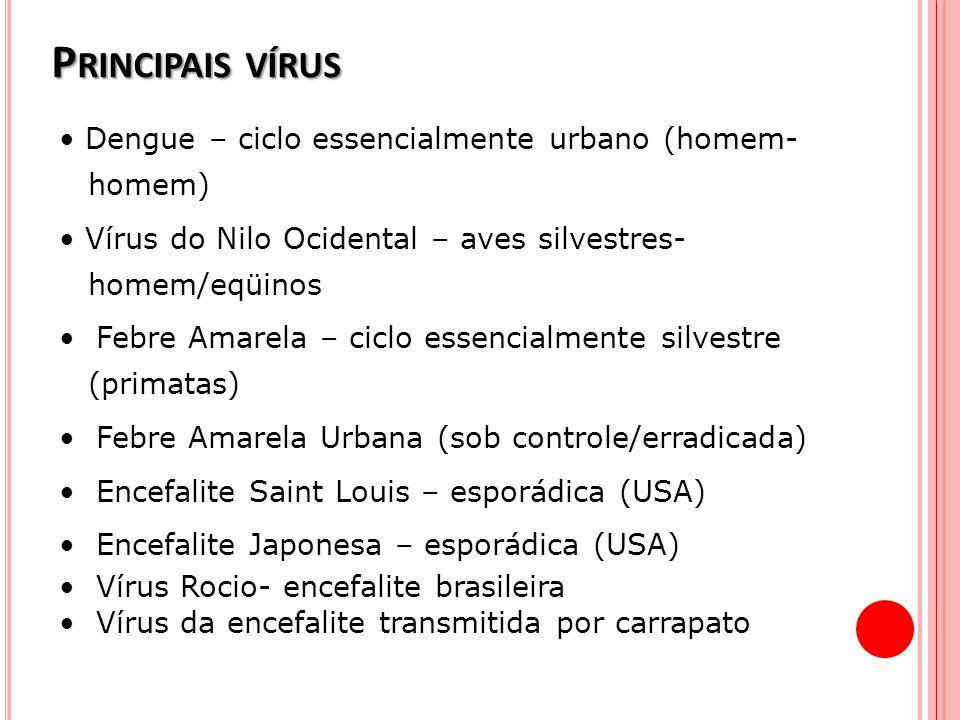 Principais vírus • Dengue – ciclo essencialmente urbano (homem- homem)