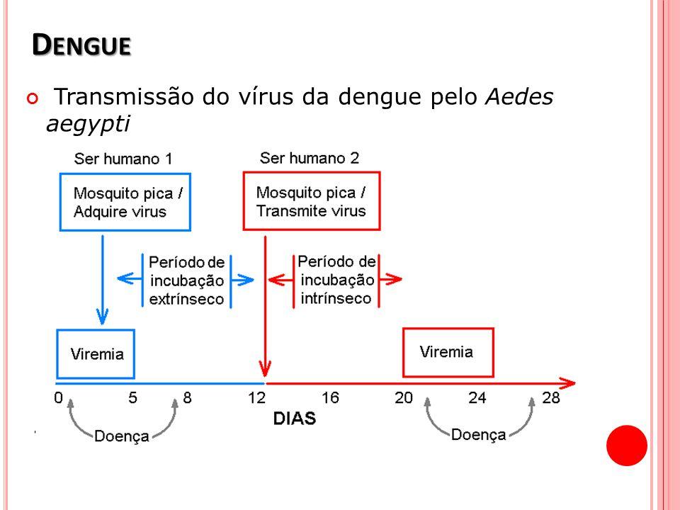Dengue Transmissão do vírus da dengue pelo Aedes aegypti