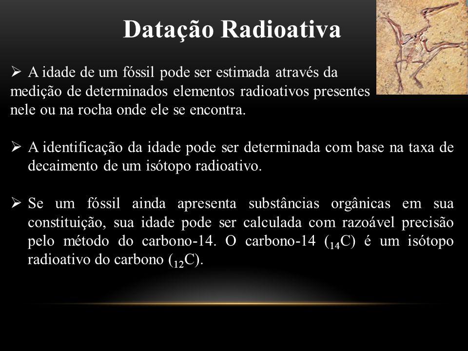 Datação Radioativa A idade de um fóssil pode ser estimada através da
