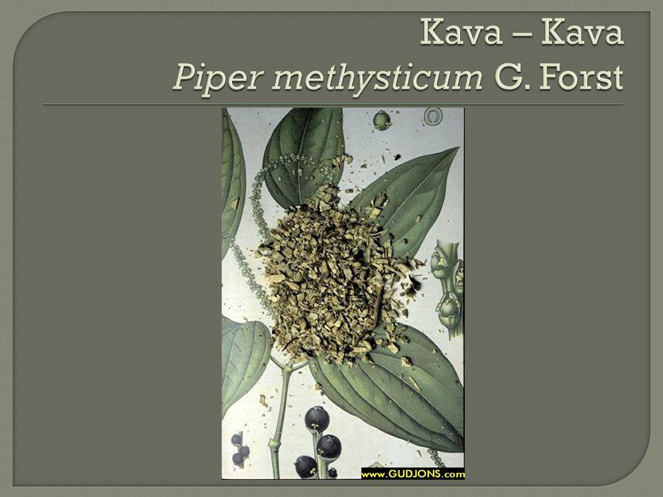 Kava – Kava Piper methysticum G. Forst
