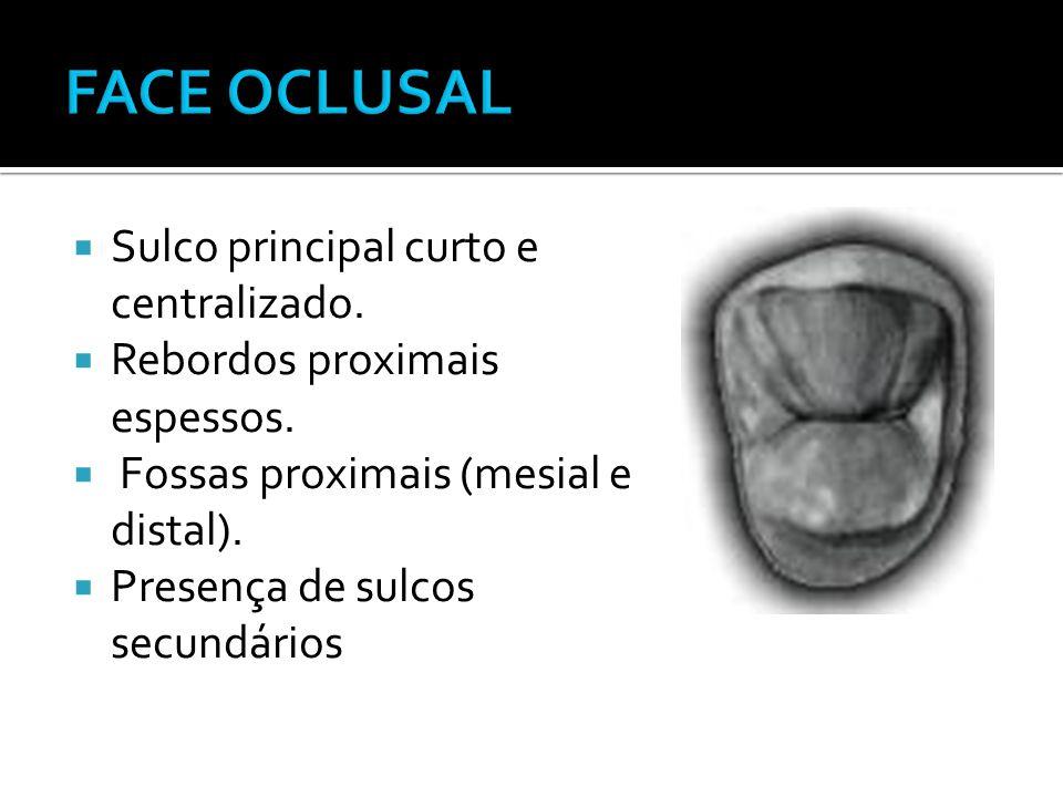 FACE OCLUSAL Sulco principal curto e centralizado.