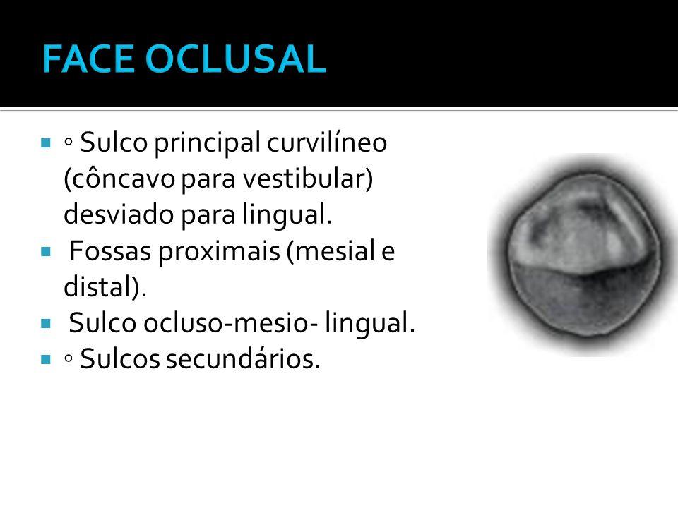 FACE OCLUSAL ◦ Sulco principal curvilíneo (côncavo para vestibular) desviado para lingual. Fossas proximais (mesial e distal).