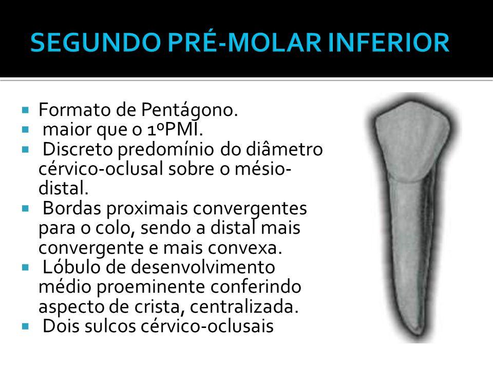 SEGUNDO PRÉ-MOLAR INFERIOR