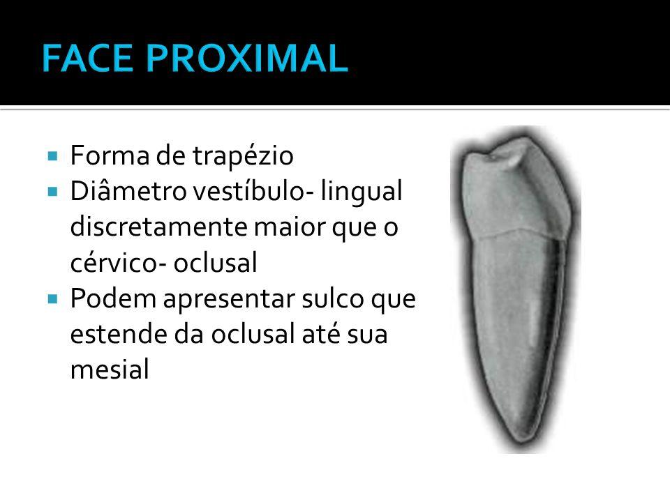 FACE PROXIMAL Forma de trapézio